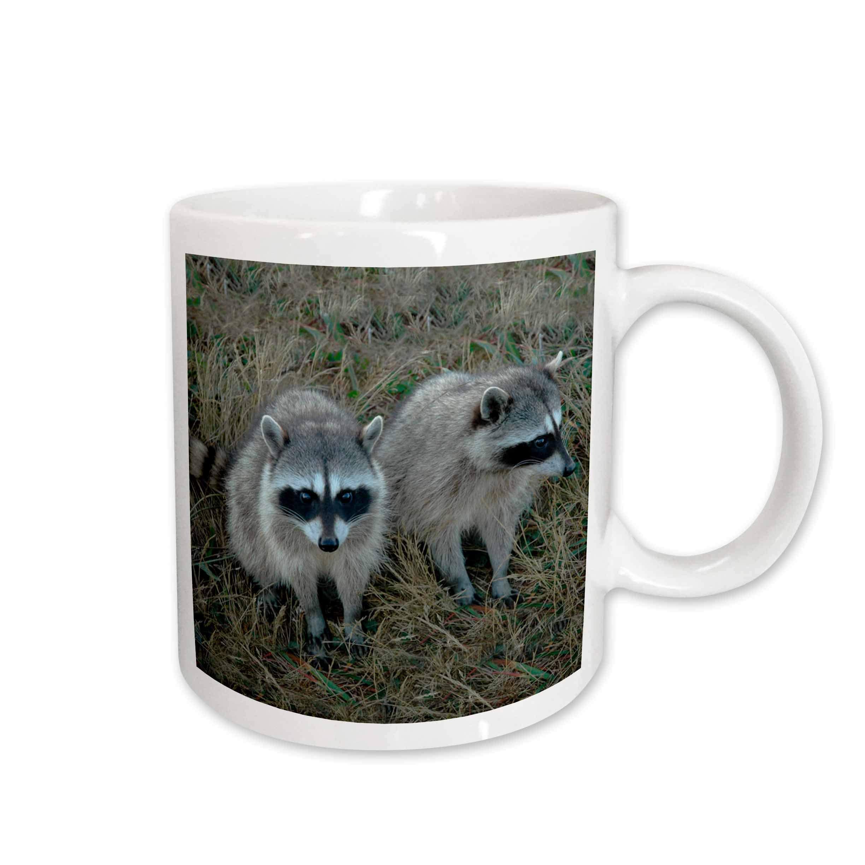 3dRose mug_1151_1 Two Raccoons Mug, 11-Ounce