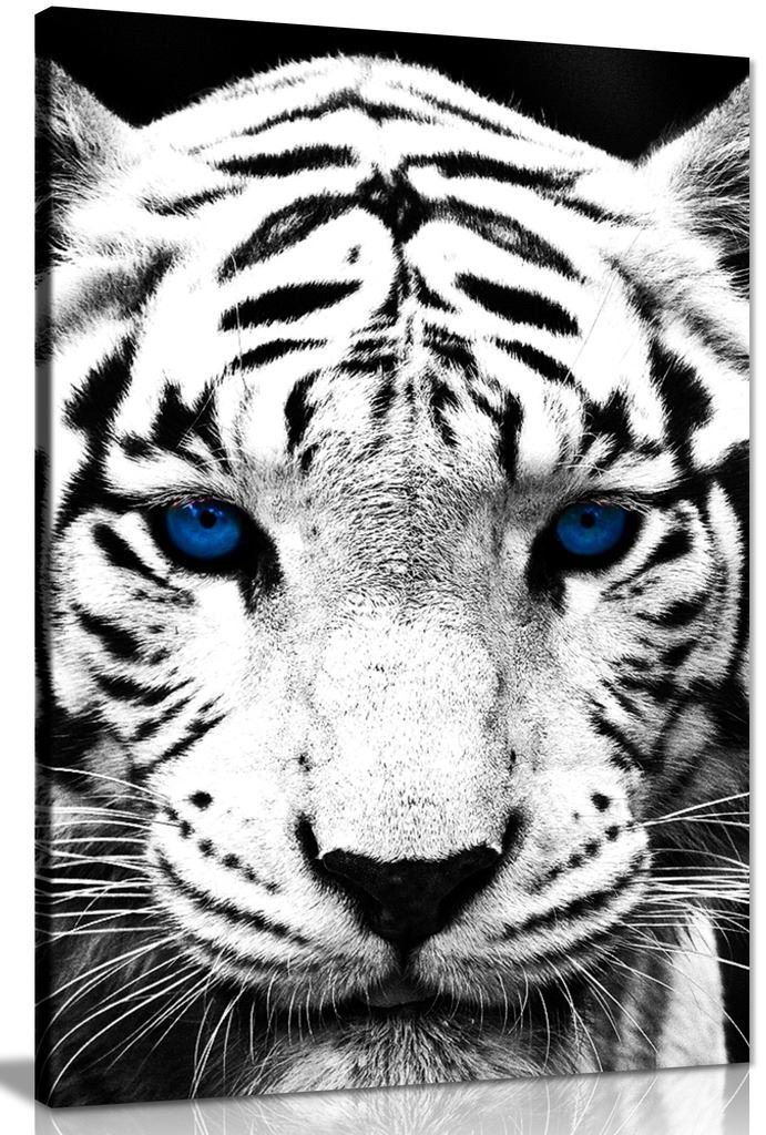 White Tiger Blue Eyes Animal Canvas Wall Art Picture Print (30x20in)