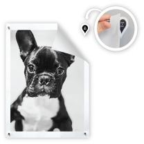 GoodHangups Damage Free Magnetic Poster and Picture Hangers Reusable Works on Any Wall As Seen On Shark Tank - 8 Pack