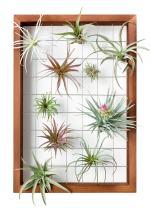 "Mkono Air Plant Frame Hanging Airplant Holder Tillandsia Display Hanger Wooden Shelf Wall Decor for House Plants, Succulent, 16"""