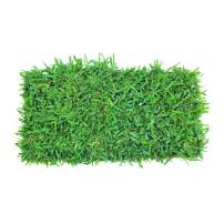 CitraBlue St. Augustine Grass 72 Count Plug Tray   Covers 72 Sqft/Per Tray