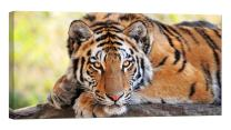LightFairy Glow in The Dark Canvas Painting - Stretched and Framed Giclee Wall Art Print - Young Tiger - Master Bedroom Living Room Decor - 6 Hours Glow - 46 x 24 inch