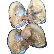 HENGSHENG 5 PCS Freshwater Cultured Pearl Oyster DIY Jewelry Loose Pearls(bcpo001-5) (5PCS)
