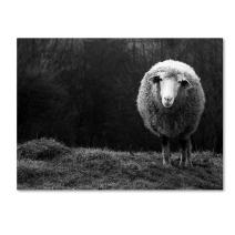 Wondering Sheep by Ajven, 24x32-Inch Canvas Wall Art