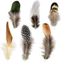 Coceca 180pcs 6 Styled Feathers Assorted Mixed Feathers for Dream Catcher Crafts