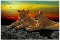 Mobicus 5D DIY Full Drill Diamond Painting,Living Room Decorative Wall Stickers Wallpaper,Lion(30X45CM/12X18inch)