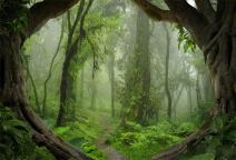 AOFOTO 5x3ft Fantastic Forest Backdrop Spring Jungle Hiking Summer Woods Pathway Photography Background Misty Wonderland Trees Plant Suburbs Picnic Camping Girl Boy Scouts Adventure Photo Studio Props