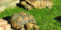 Nature's Seed PB-TORT-5000-F Tortoise Pasture, 5000 sq. ft