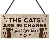 """Meijiafei Funny Cat Gifts for Cat Lovers Gift for Women Home Decor Plaque Animal Sign Pet Novelty Gifts 10"""" X 5"""""""
