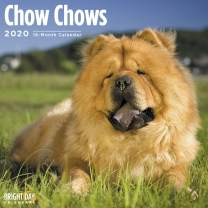 2020 Chow Chows Wall Calendar by Bright Day, 16 Month 12 x 12 Inch, Cute Dogs Puppy Animals Puffy Lion Adorable Songshi Quan