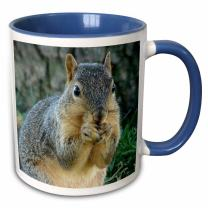3dRose Squirrel Eating Acorns Photographed by Angelandspot-Two Tone Blue Mug, 11 oz, Multicolored