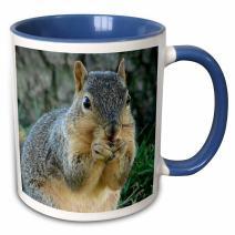 3dRose Squirrel Eating Acorns Photographed by Angelandspot-Two Tone Blue Mug, 11 oz, Multicolored