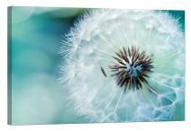 LightFairy Glow in The Dark Canvas Painting - Stretched and Framed Giclee Wall Art Print - Dandelion - Master Bedroom Living Room Decor - 6 Hours Glow - 24 x 16 inch