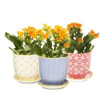 Chive - Set of 3 Liberte, Small 3 Inch Succulent Pot with Saucer and Drainage Hole/Indoor/Outdoor Garden,Yellow, Blue, Red, (Mix 3)