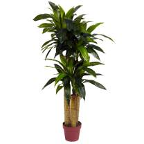 Nearly Natural 6648 4ft. Corn Stalk Dracaena Silk Plant (Real Touch),Green