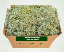 2lbs Fresh Spanish Moss, Live Spanish Moss, Live air Plant