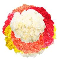 GlobalRose Wholesale Color Carnations - 350 Assorted Color Carnations