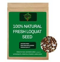 Fresh Loquat Seeds, Eriobotrya Japonica Seeds,Japanese Plum Seeds, No-GMO Seeds, (30 Loquat Seeds)