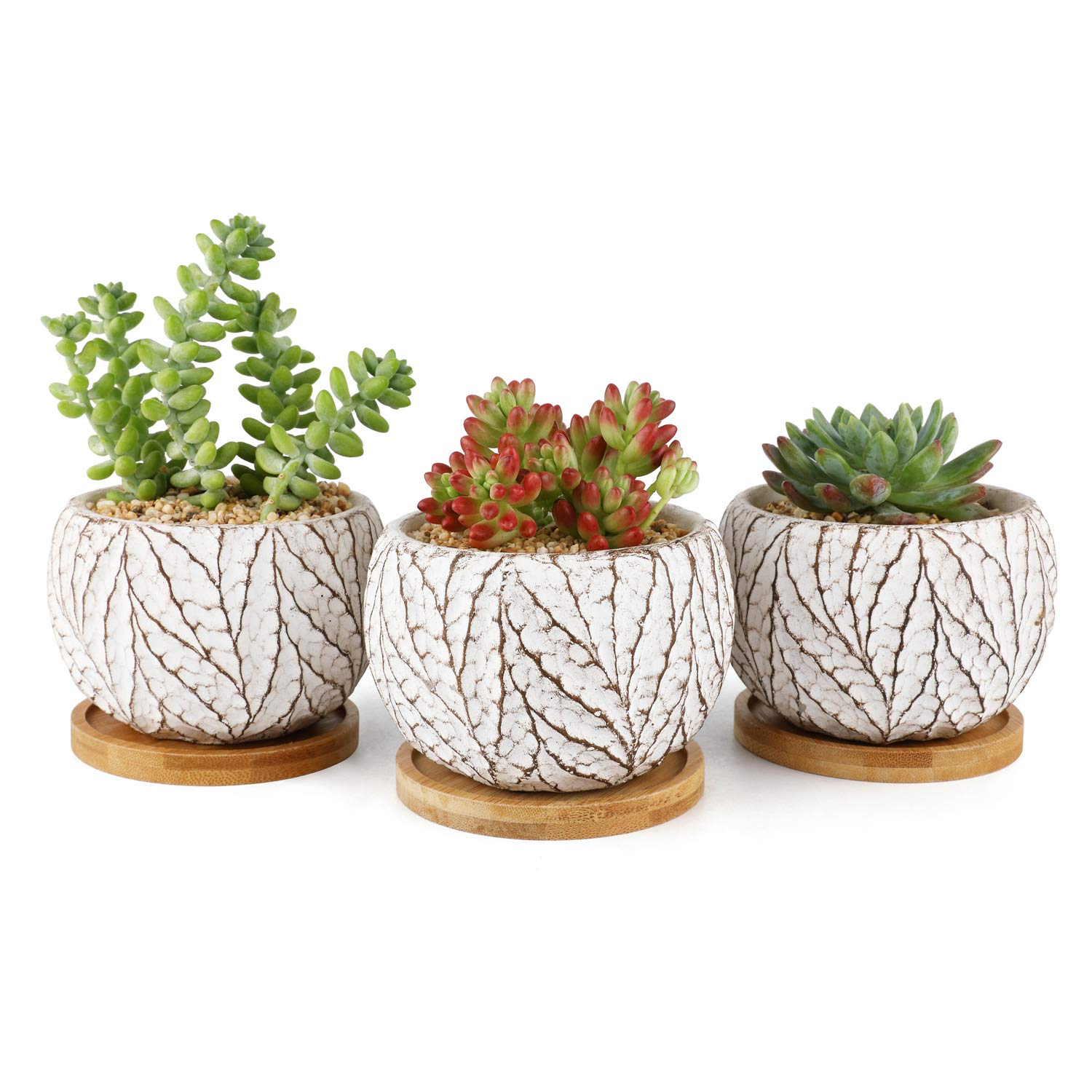 T4U Small Succulent Pots Cement Planters for Succulents, 4 Inch Succulent Small Pot Set of 3, Leaf Pattern Indoor Concrete Cactus Plant Pot with Saucer Round Succulent Holder for Home Office Table