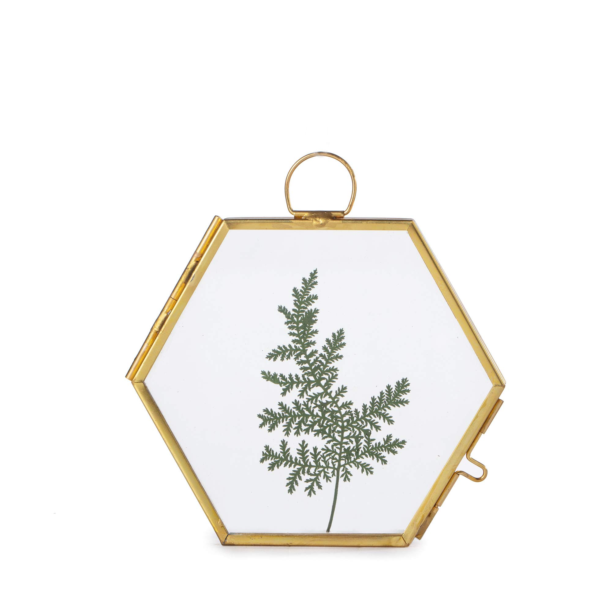 NCYP Small Wall Hanging Brass Hexagon Glass Artwork Certificate Photo Picture Display Frame Geometric Ornament Plant Specimen Clip Modern Vertical Decor Card Holder 3.5 inchs, Glass Frame only