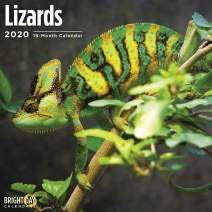 2020 Lizards Wall Calendar by Bright Day, 16 Month 12 x 12 Inch, Reptiles and Bugs Animals