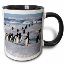 3dRose Adelie penguin colony on Devil Island, Antarctica Mug, 11 oz, Black