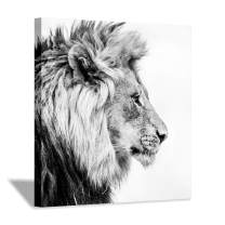 Hardy Gallery Lion Art Wall Decor Picture: Wildlife Portrait Graphic Artwork Print Painting on Wrapped Canvas (12''x12'')
