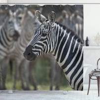 "Ambesonne African Shower Curtain, Zebra in Serengati National Park Safari Animal in Desert Picture, Cloth Fabric Bathroom Decor Set with Hooks, 70"" Long, Black Reseda"