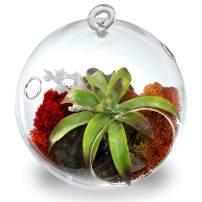 "CYS EXCEL Plant Terrarium, Glass Orbs, (4.5"" Tall x 4"" Wide, Pack 6) Air Plants, Tea Light Candle Holders, Succulents Moss Miniature Garden Planters Home Décor"