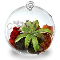 "CYS EXCEL Plant Terrarium, Glass Orbs, (4.5"" Tall x 4"" Wide, Pack 6) Air Plants, Tea Light Candle Holders, Succulents Moss Miniature Garden Planters Home Décor"