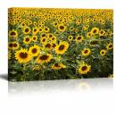 "Canvas Prints Wall Art - Beautiful Scenery/Landscape Large Sunflower Field | Modern Wall Decor/Home Decoration Stretched Gallery Canvas Wrap Giclee Print & Ready to Hang - 24"" x 36"""