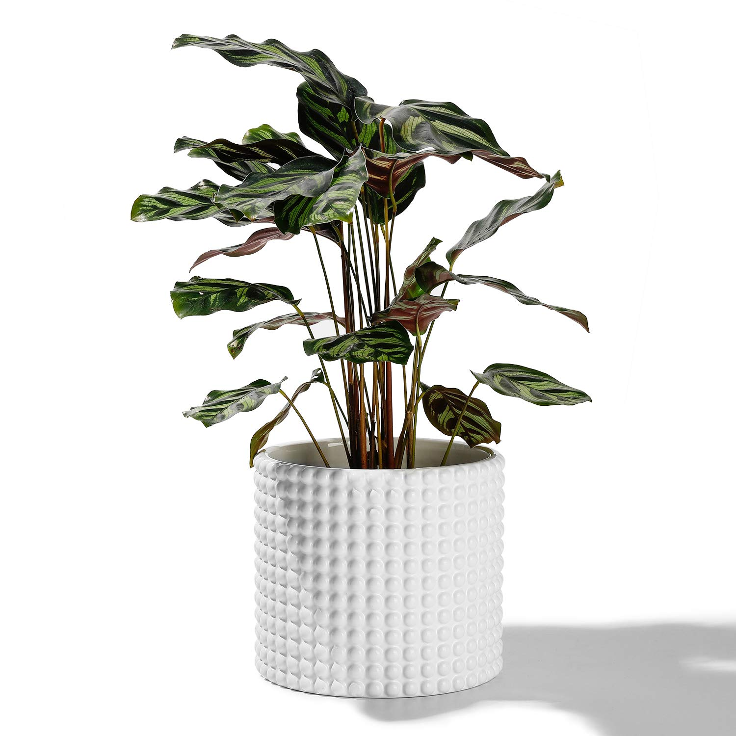 POTEY 055102 White Ceramic Vintage-Style Hobnail Textured Flower Planter Pots for Indoor Plants Flower Succulent with Drainage Hole(6.1 Inch D, Plant NOT Included)
