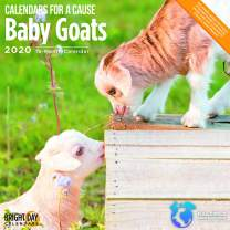 2020 Baby Goats Wall Calendar by Bright Day, 16 Month 12 x 12 Inch, Cute Animals