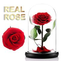 moxuan Beast Rose, Real Red Rose, Gift for Her Galentines Day, Valentines Day, Mothers Day, Anniversary, Birthday Gift