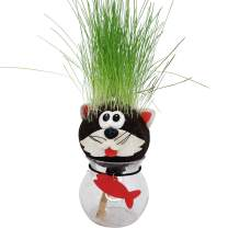 AvoSeedo Grass Head - Funny Fast Growing Grass Head Learning Toy for Kids (Cat)