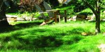 Nature's Seed S-FEOV-50LB Sheep Fescue Grass, 50 lb, Brown/A