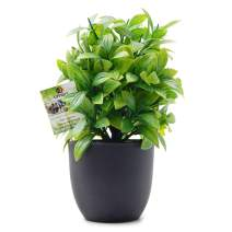 OFFIDIX Artificial Eucalyptus Plants with Black Vase for Office Desktop, Home and Friends' Gift Fake Plant with Plastic Pots for Home Decoration Potted Plants for Bookshelf (Light Green)