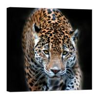 LightFairy Wall Art for Living Room - Glow in The Dark Canvas Painting - Stretched and Framed Giclee Print - Leopard On The Prowl - Wall Decorations for Bedroom - 32 x 32 inch