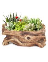 Dahlia Driftwood Stump Log Concrete Planter/Succulent Pot/Plant Pot, 7.4L x 3.9W