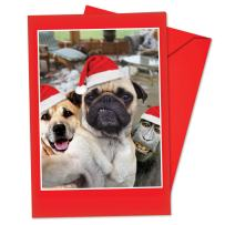 12 'Animal Selfies Dog' Boxed Christmas Cards with Envelopes 4.63 x 6.75 inch, Funny Pug, Pup and Monkey in Santa Hats Holiday Notes, Silly Animals Cards, Unique Christmas Stationery B2373DXSG