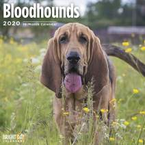2020 Bloodhounds Wall Calendar by Bright Day, 16 Month 12 x 12 Inch, Cute Dogs Puppy Animals Hunting