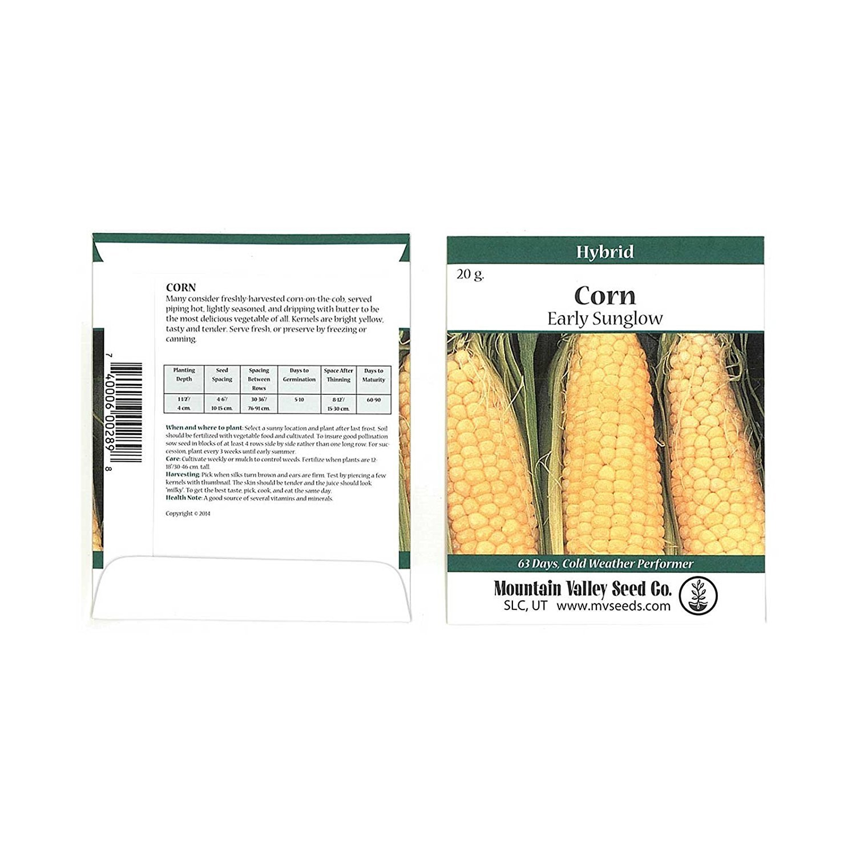 Early Sunglow Hybrid Corn Garden Seeds - 20 Gram Packet ~93 Seeds - Non-GMO, SU, Cold Weather Vegetable Gardening Seeds