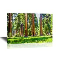 wall26 - Watercolor Style Canvas Wall Art - The Famous Big Sequoia Trees are Standing in Sequoia National Park - Gallery Wrap Modern Home Decor   Ready to Hang - 24x36 inches