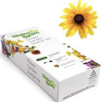 Window Garden - Brown Eyed Susan Flower Starter Kit - Grow Your Own Beauty. Germinate Seeds on Your Windowsill Then Move to Planter or Beds. Mini Greenhouse System Make's it Foolproof, Easy and Fun.
