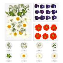 TAEERY 54 PCS Real Dried Pressed Flowers Leaves Petals for Crafts - Colorful Pressed Flowers Daisies for DIY Candle Resin Jewelry Nail Pendant Crafts Making Art Floral Decors