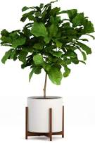 """Fox & Fern Mid-Century Modern Plant Stand - EXCLUDING White Ceramic Planter Pot (Fits 15"""" Pot, Acacia Wood)"""