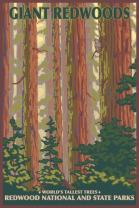 Redwood National Park, California (24x36 Giclee Gallery Print, Wall Decor Travel Poster)