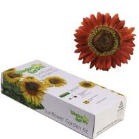 Window Garden - Evening Sun Sunflower Flower Starter Kit - Grow Beauty. Germinate Seeds on Your Windowsill Then Move to Planter or Beds. Mini Greenhouse System Make's it Foolproof, Easy and Fun.