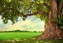 Baocicco 10x8ft Vinyl Ancient Tree Backdrops for Photography Background Spring Meadow Fresh Green Leaves Spring Landscape Garden Nature Landscape Children Adults Portraits Photo Studio Props