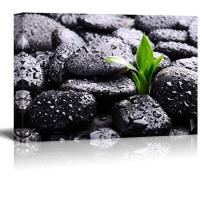 wall26 - Rain Drops Over Black Rocks and a Little Green Plant - Canvas Art Home Art - 24x36 inches